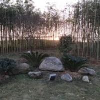 江西省南昌市室外围栏花园栅拦菜园爬藤架竹子竹篱笆哪里有卖便宜