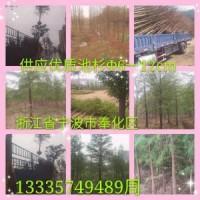 大量供应优质池杉,胸径5-15公分